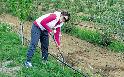 Άννα Μπιτζιλή στο χωράφι καλλιεργεί τον θαυματουργό καρπό Αρώνια!